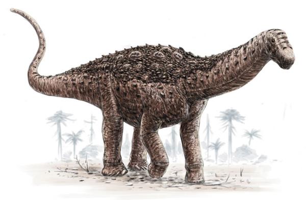http://www.geowiki.fr/images/6/64/Saltasaurus.jpg
